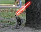 squirrel-lightsaber