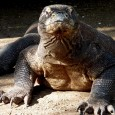 On this episode we discus the empa---- KOMODO DRAGON!!!